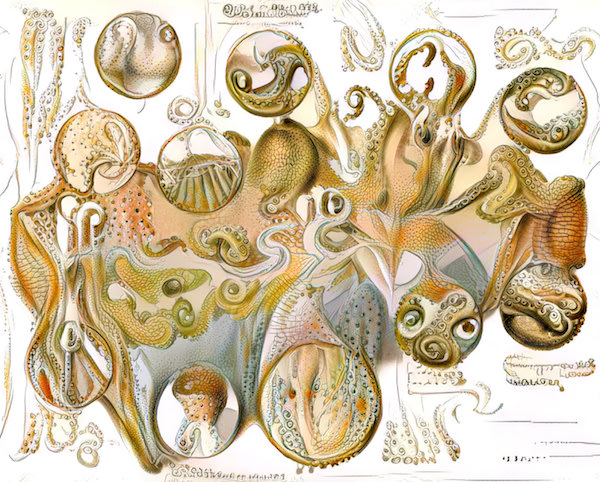 Visualising complexity in between organisms and the environment